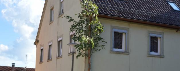 Liebesmaien – der Maibaum für die Liebste